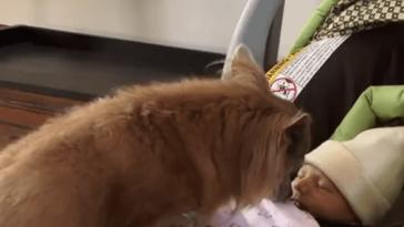 kutya örül az újszülöttnek