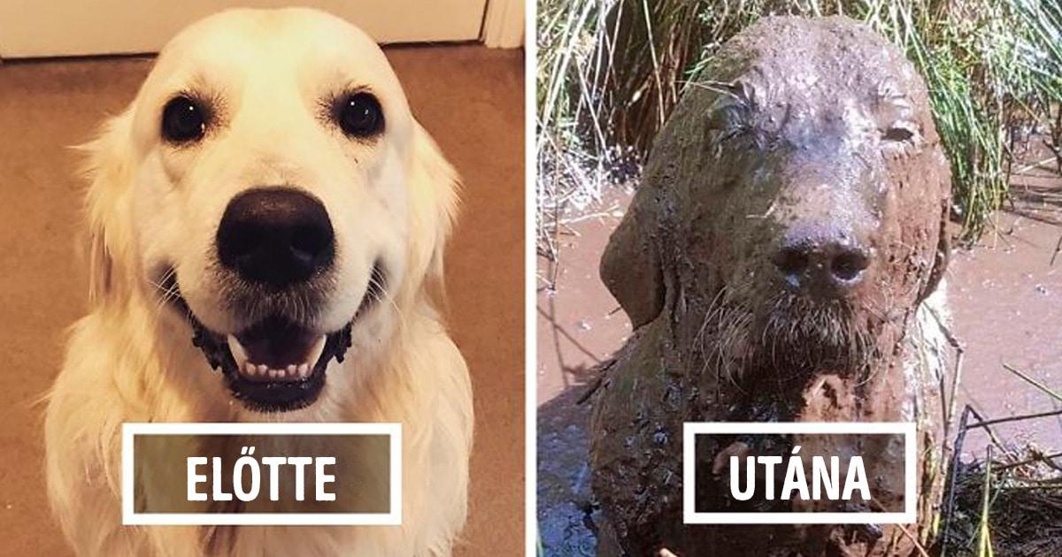 sáros kutyák
