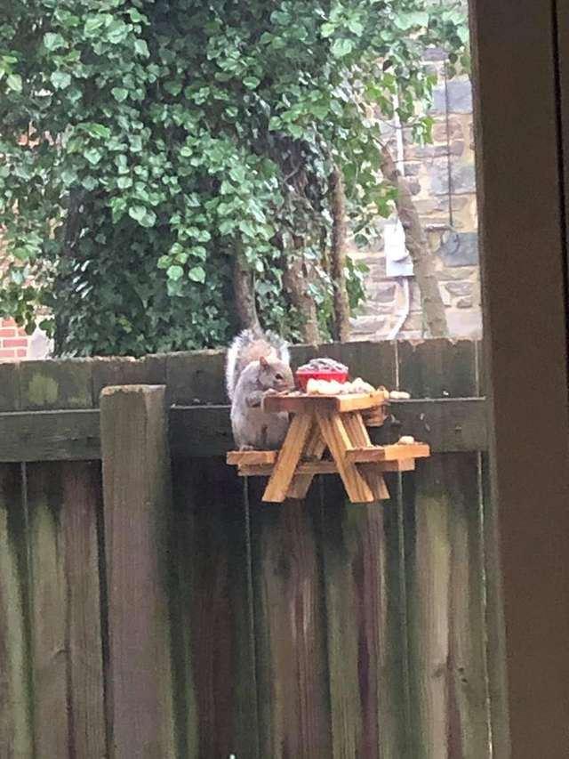 Aranyos piknikasztallal lepte meg a mókusokat egy férfi
