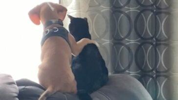 együtt bámult ki az ablakon kutya és macska