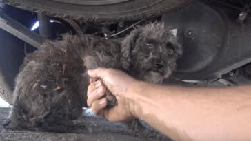Állatmentők egy kóbor kutya megmentésére siettek