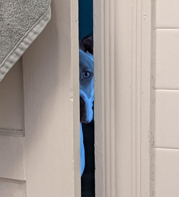 9 fura kutyus
