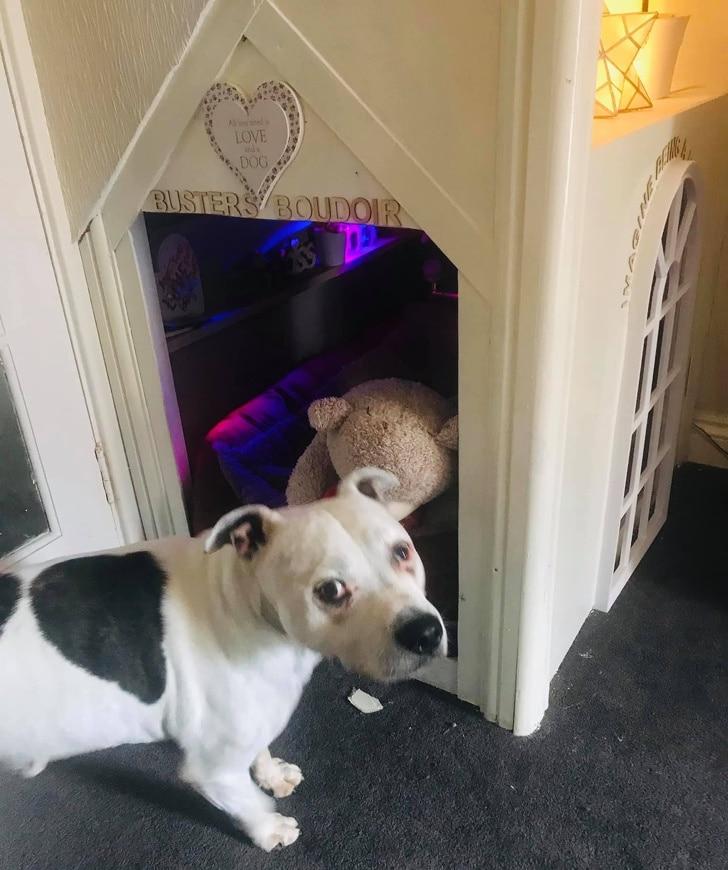 A férfi miniházat épített a félős kutyájának