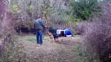 Egész életét láncra verve töltötte ez a kutya, de végre egy férfi eloldozza őt