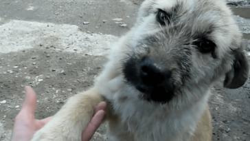 Egy út mentén találtak rá a rémült kutyára