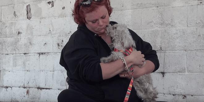 Súlyosan sérült kutyában most tudatosul, hogy megmentették