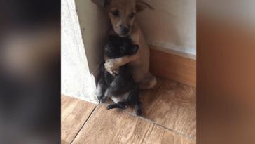 Szívszorító módon ölelkezik a két megmentett kiskutya
