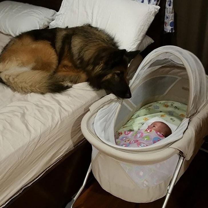 a kutyák törődése semmi máshoz sem fogható