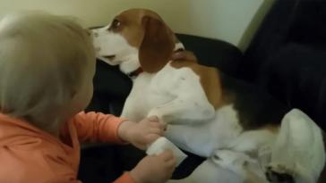 Íme a bizonyíték, hogy minden gyermek mellé kell egy kutya