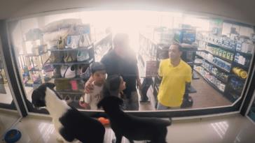 Szuper ötletet talált ki egy állatbolt a menhelyi kutyák megmentésére