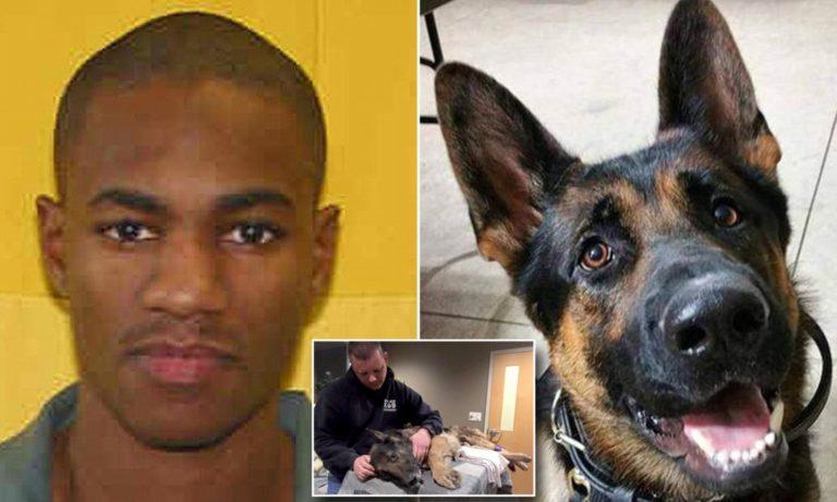 45 év börtönre ítélték a férfit egy rendőrségi kutya meggyilkolásáért