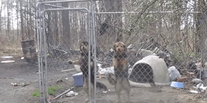 A két kutya egész életét ketrecben töltötte