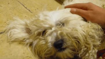 A kutyát egy óra választotta el a végleges elaltatástól