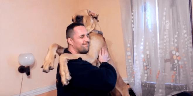 Apró kutyának képzeli magát ez az óriási dog
