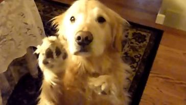 Arra kérte a kutyát, hogy tegyen rendet a lakásban