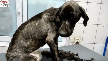 Az állatmentők szerint kevesebb, mint 24 órája volt hátra