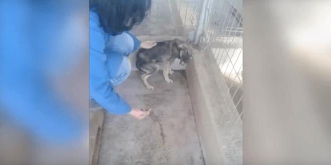 Bántalmazott kutyát először simogatják meg