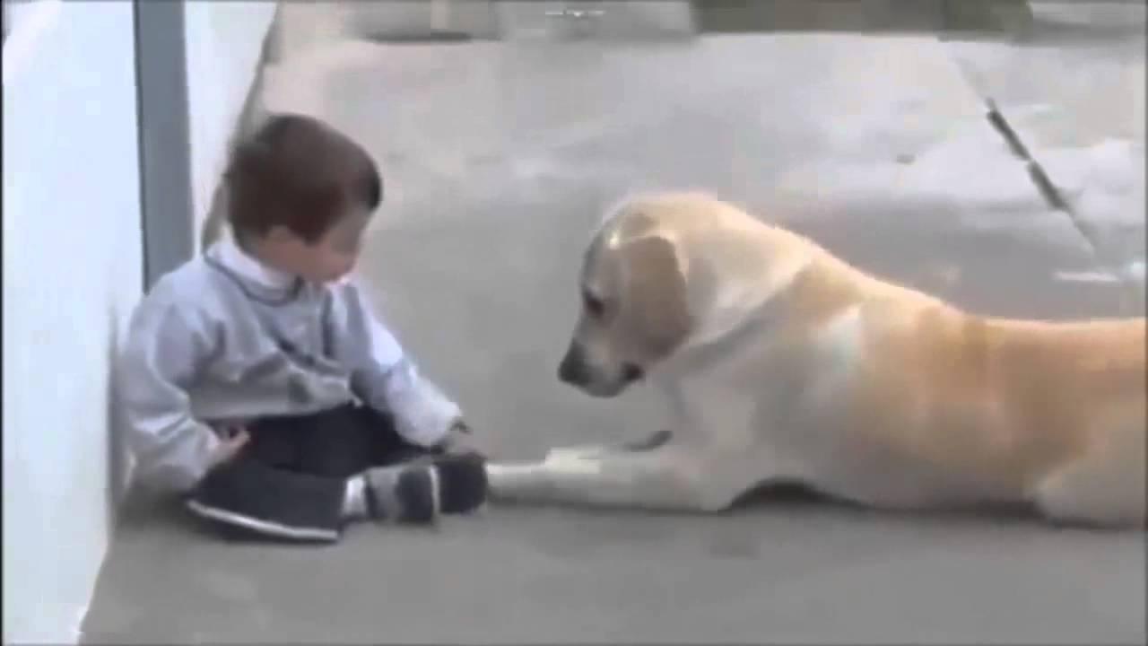 Egy kutya aki barátkozásra bírja az érintésfóbiás, Down-kóros kisfiút