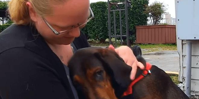 Ez a kutya egész életében láncra volt kötve