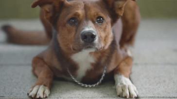 Fájdalmas, mégis megható videó mutatja be a kutyák hűségét
