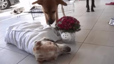 Haldokló kutyának az volt az kívánsága, hogy szeressék