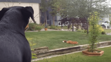 Kutyája elkezdett ugatni az udvaron