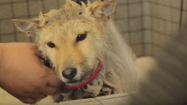 Megható módon köszöni meg a kutya, hogy kimentették egy húsüzemből