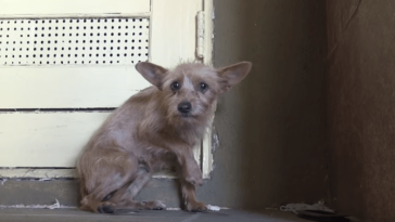 Megmentették a félelemtől reszkető kutyát