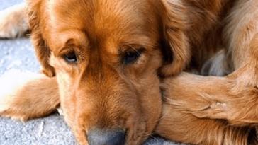 Teljesen lefagy a kutya, amikor 3 év után újra meglátja gazdáját