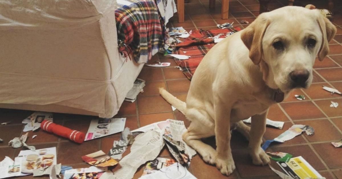 Ezeken a bűntudatos kutyákon kacag most az internet