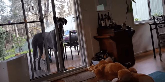 Gazdi szól kutyájának, hogy eljött a fürdés ideje
