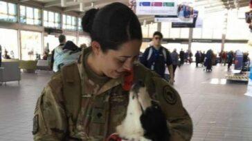 Így reagált a kutya, mikor meglátta a seregből hazatérő gazdáját