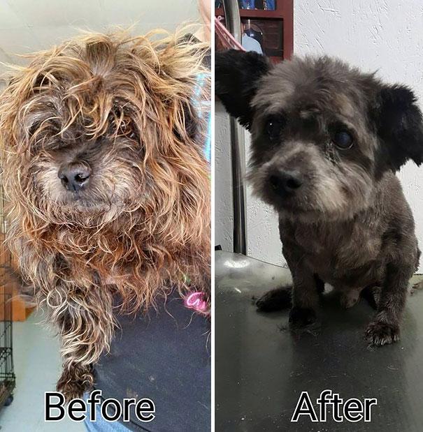 Haldokló kutyát fogadott örökbe