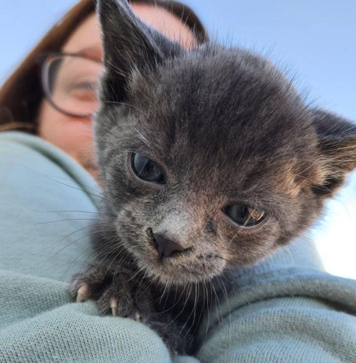 állatok új otthonra találtak15