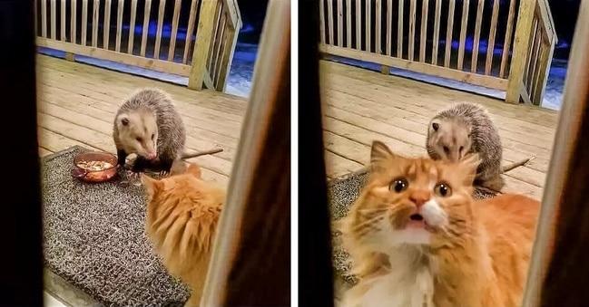állatok ügyesen színészkednek1