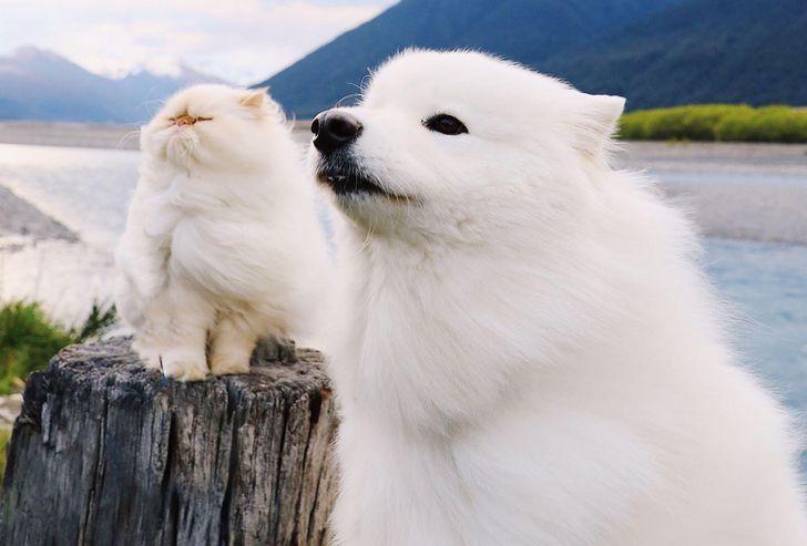állatok között szoros barátság alakult ki5