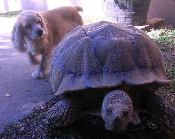 állatok között szoros barátság alakult ki9