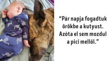 állatos fotók jókedvre derítenek