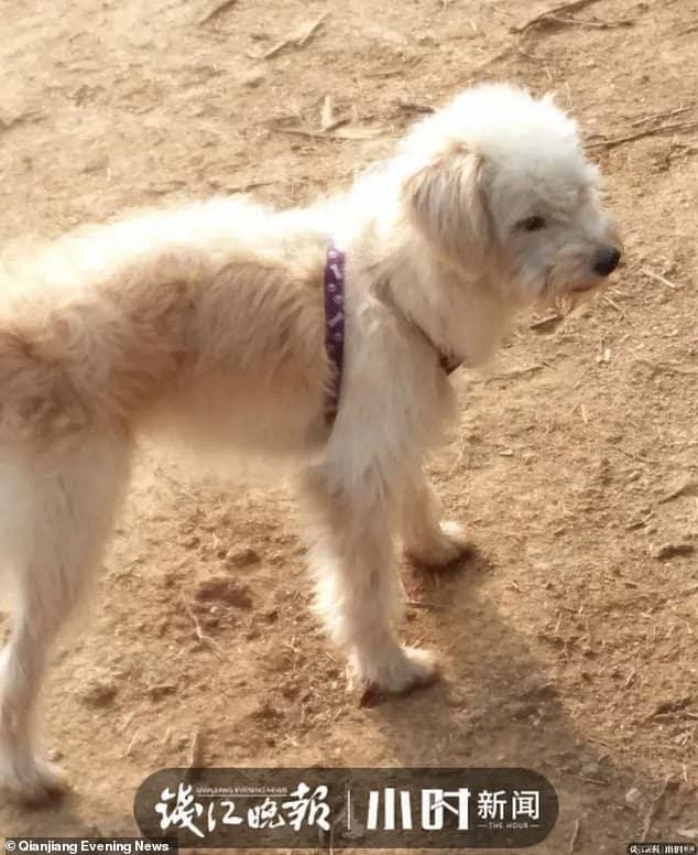 60 kilométert gyalogolt hazáig a kutya