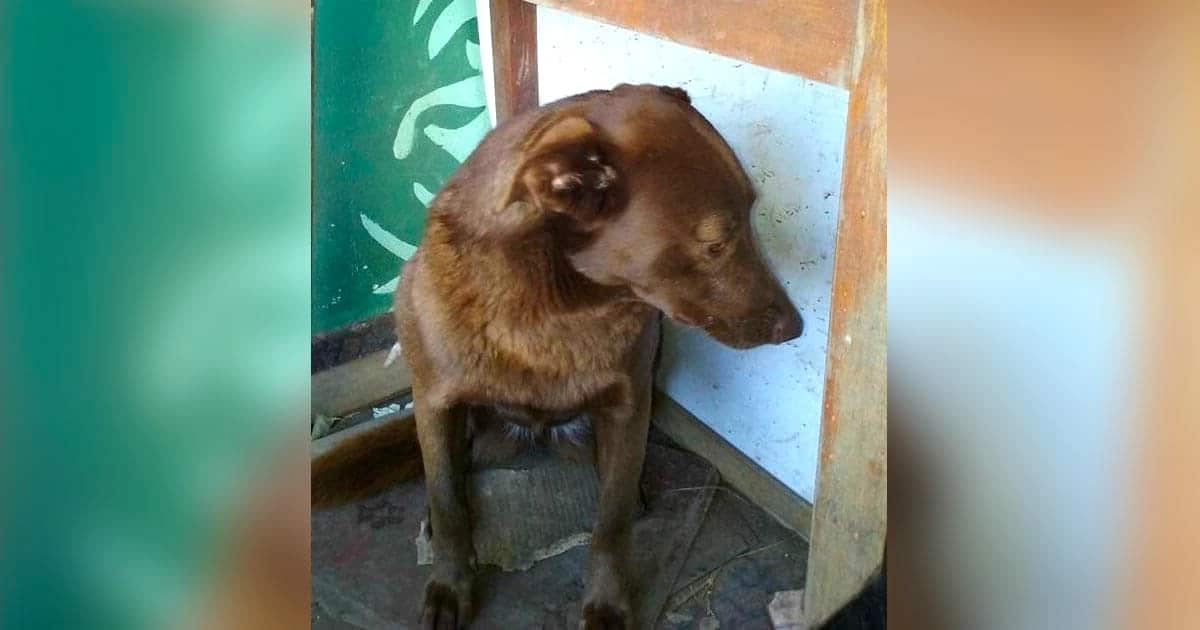 A depressziós kutyus 2 évet töltött magányosan a menhelyen