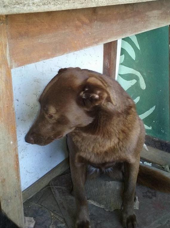 A depressziós kutyus 2 évet töltött magányosan a menhelyen1