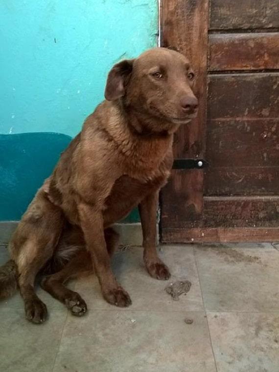 A depressziós kutyus 2 évet töltött magányosan a menhelyen2