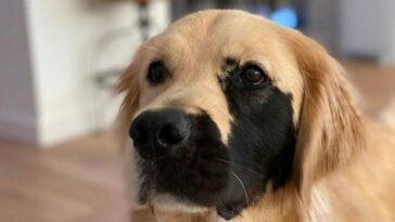 Foltos pofájú kutya lett az internetezők új kedvence