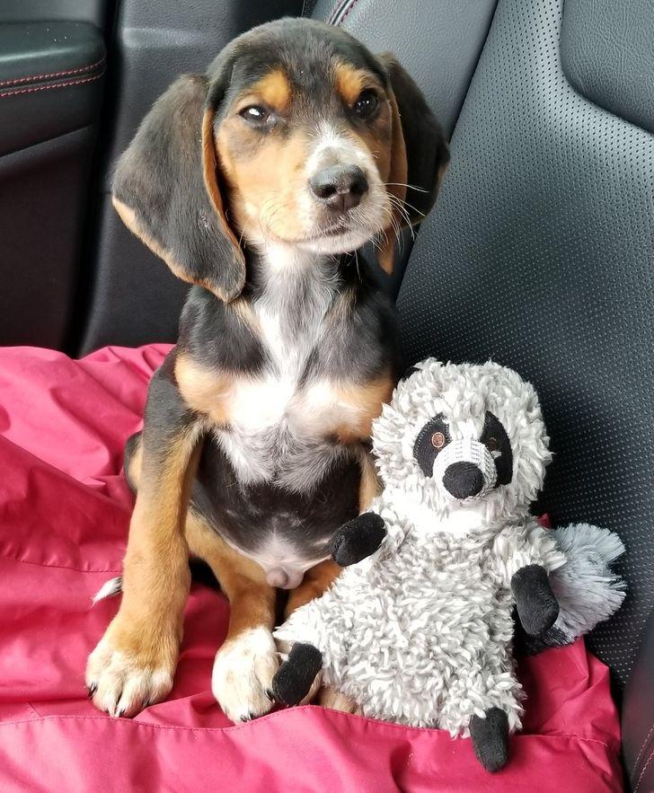 a boldogság kutyákban is mérhető