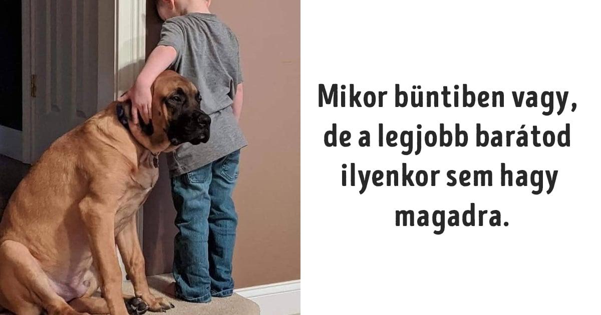 a kutyáinkra mindig számíthatunk