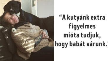 a kutyák a világ legkedvesebb teremtései