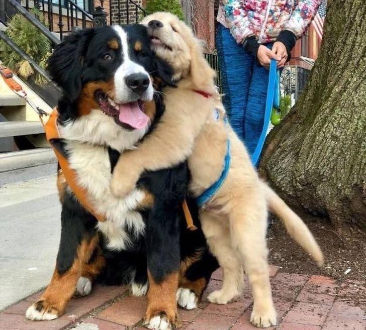 a kutyák a világ legkedvesebb teremtései11