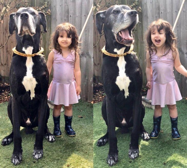 a kutyák a világ legkedvesebb teremtései4