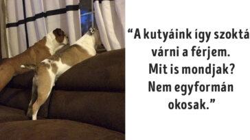 a kutyáknak érhetetlen a logikájuk