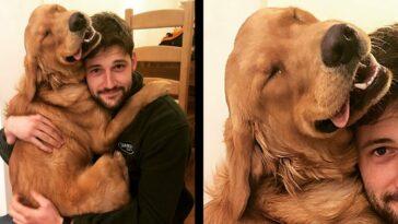 a kutyáknak csak szeretet kell